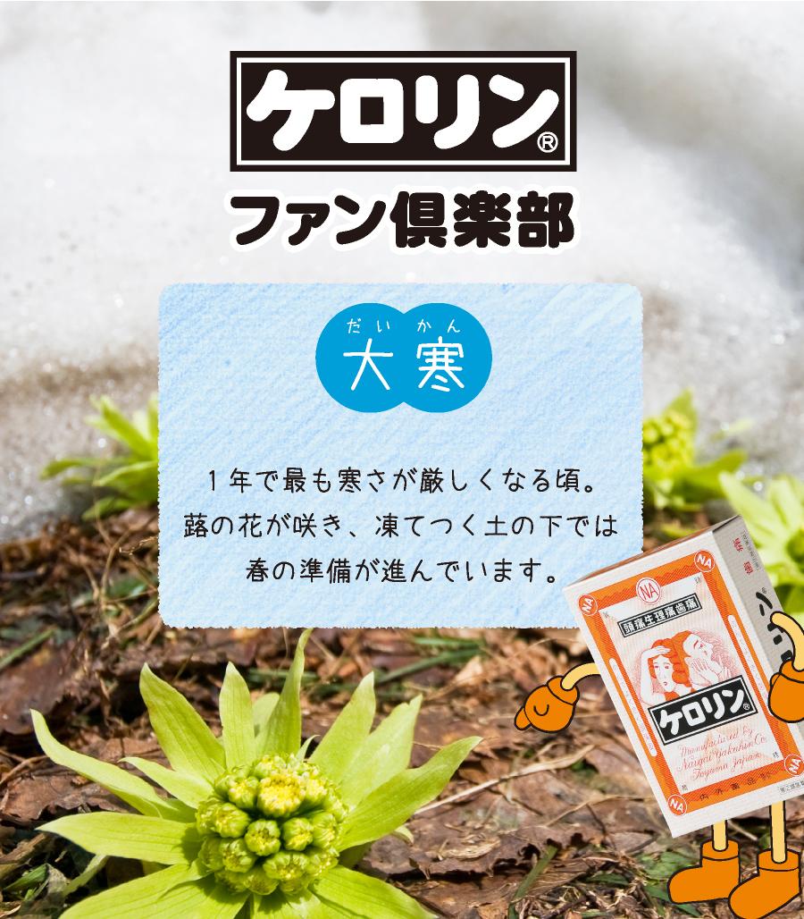 大寒(1月21日〜2月3日):1年で最も寒さが厳しくなる頃。蕗の花が咲き、凍てつく土の下では春の準備が進んでいます。