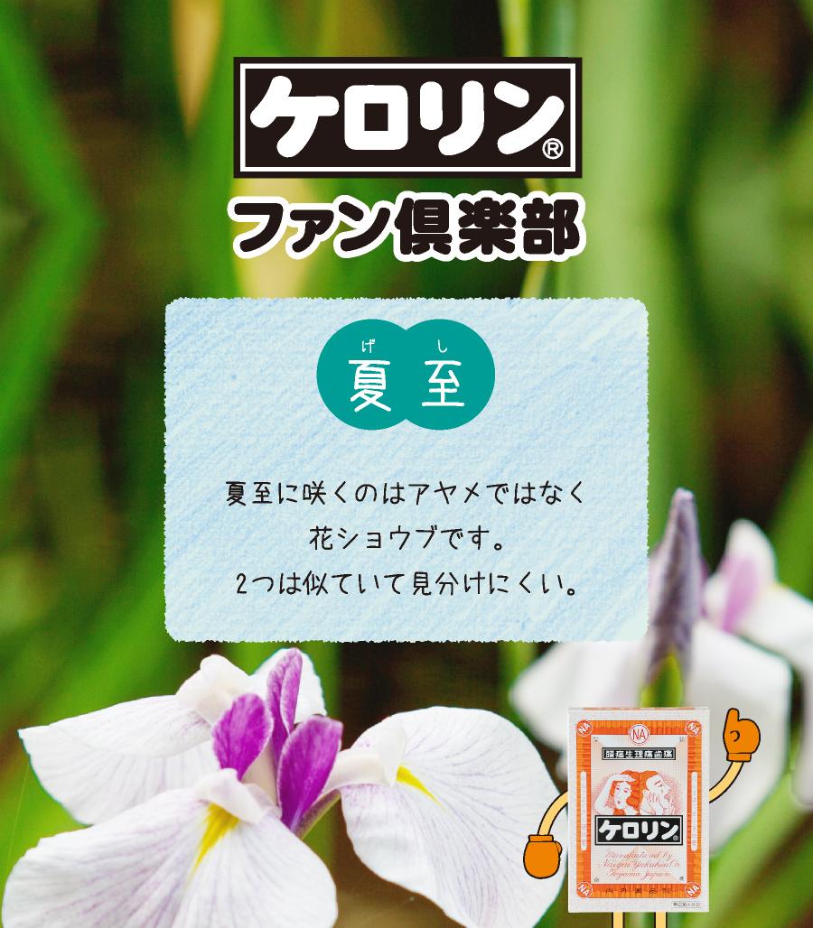 夏至(6月21日〜7月6日):夏至に咲くのはアヤメではなく花ショウブです。2つは似ていて見分けにくい。