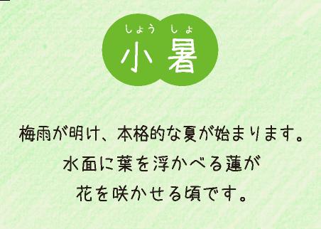 小暑(7月6日〜7月22日):梅雨が開け、本格的な夏が始まります。水面に葉を浮かべる蓮が花を咲かせる頃です。